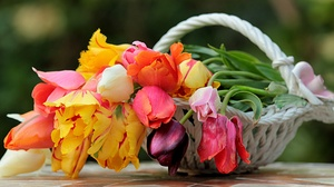 Flower Spring Tulip 4913x2643 Wallpaper