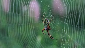 Arachnid Spider Spider Web 1920x1200 Wallpaper