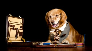 Dog Pet 4928x2772 Wallpaper
