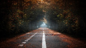 Fall Forest Nature Road Tree Lined 1920x1080 Wallpaper