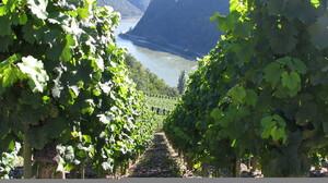 Man Made Vineyard 2048x1536 Wallpaper
