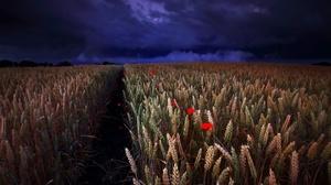Nature Night Poppy Summer Wheat 1920x1182 Wallpaper