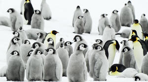 Bird Penguin 2000x1333 Wallpaper