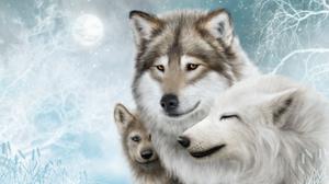 Wolf Snow Winter Animals White Mammals Artwork 2560x1440 Wallpaper