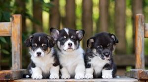 Dog Pet Baby Animal 2048x1367 Wallpaper