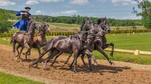 Horse Hungarian Man 3840x2160 wallpaper