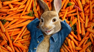 Carrot Rabbit 2560x1600 Wallpaper