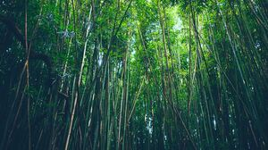 Bamboo Forest Nature 5457x3638 wallpaper