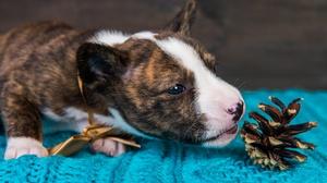 Dog Baby Animal Puppy 2000x1335 Wallpaper