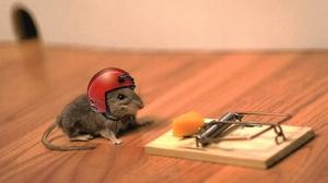 Mouse 1920x1200 Wallpaper