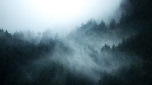 British Columbia Canada Fog Forest 1920x1282 Wallpaper