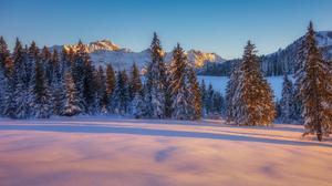 Mountain Nature Snow Sunset Tree Winter 1920x1200 Wallpaper