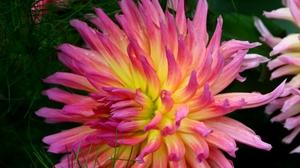 Flower Garden Colorful Fall 2629x2592 Wallpaper