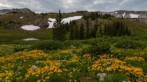 Meadow Cloud Flower Mountain Hill Fir Tree 5760x3840 Wallpaper