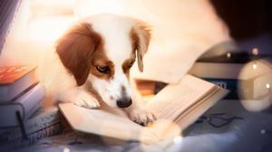 Book Dog Pet 2048x1365 Wallpaper