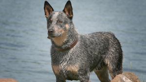 Dog Pet 2615x1743 Wallpaper