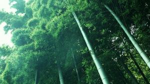 Earth Bamboo 2048x1280 Wallpaper