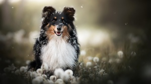 Dog Dandelion Depth Of Field Pet 2048x1365 Wallpaper