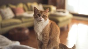 Cat Pet 6016x4016 Wallpaper