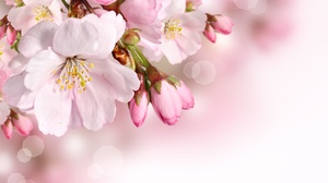 Close Up Flower Nature Pink Flower Spring 3480x2553 wallpaper