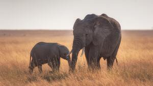 Baby Animal Elephant Wildlife 3902x2605 wallpaper