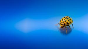Beetle Insect Ladybug Macro 2048x1365 Wallpaper