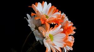 Earth Chrysanthemum 4665x2865 wallpaper