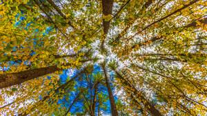 Tree Redwood Fall Canopy 2048x1365 Wallpaper