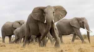 Elephant Wildlife 3840x2400 Wallpaper