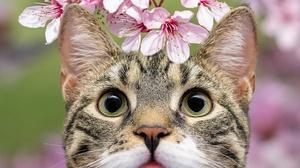 Blossom Cat Pet 2880x1920 Wallpaper
