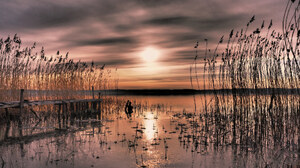 Bay Plant Reed Sunset Sweden 2048x1365 Wallpaper