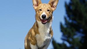 Dog 1580x1264 Wallpaper
