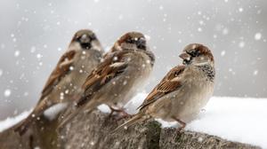 Passerine Snowfall Sparrow Wildlife Winter 2048x1365 Wallpaper