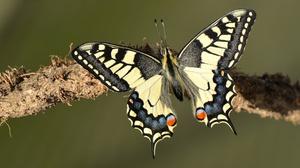 Branch Butterfly Macro Swallowtail Butterfly 3840x2160 Wallpaper