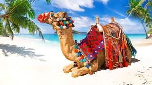 Beach Camel Sand Tropical 3078x2051 Wallpaper