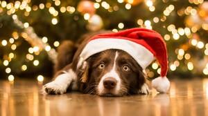 Christmas Christmas Lights Dog Pet Santa Hat 5120x2880 Wallpaper