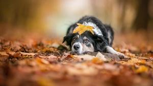 Depth Of Field Dog Leaf Pet 2048x1365 Wallpaper