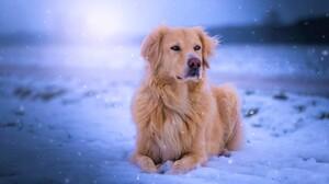 Dog Snow Winter Snowfall Pet 1920x1200 Wallpaper