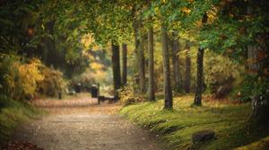 Fall Landscape Nature Path Tree 2048x1365 wallpaper