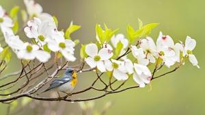 Bird Flower Wildlife 2048x1365 Wallpaper