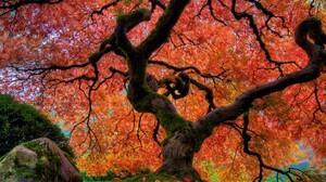 Fall Foliage Japanese Garden Tree 3840x2400 wallpaper