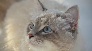 Cat Snow 5120x2880 Wallpaper