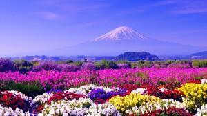 Colorful Earth Flower Japan Landscape Mount Fuji Volcano 2560x1600 Wallpaper