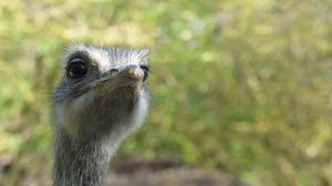 Animal Emu 4608x3456 Wallpaper