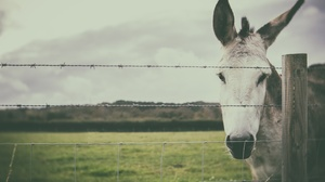 Animal Donkey 5760x3840 Wallpaper