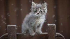Animals Kittens Cats Mammals Feline 2000x1333 Wallpaper