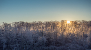 Nature Landscape Sky Trees Winter Sun Sunrise 1920x1080 Wallpaper