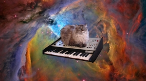 Cat Piano Space 1680x1050 wallpaper
