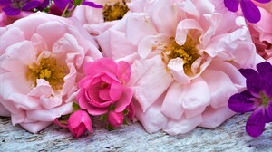 Colorful Daisy Earth Flower Peony Pink Flower Purple Flower Rose 7600x5700 Wallpaper