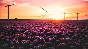 Rural Spring Blossom Sunset Flowers Tulips Yellow Pink Field Green Landscape Sun Orange Wind Turbine 7000x4669 Wallpaper